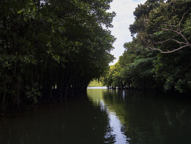 浦内川の支流