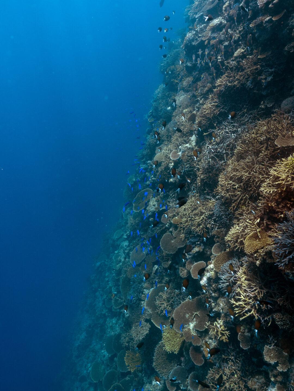 サンゴ礁と魚